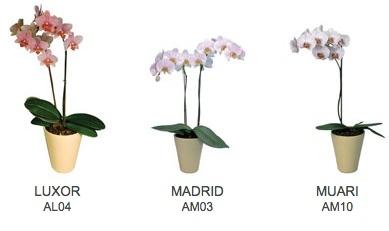 OrquideasEslovenia1