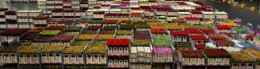 Los viveros holandeses se encomiendan a la geotermia
